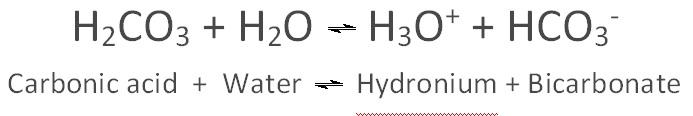 bicarbonate equation